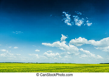 view on cloudy sky and yellow field sunny day
