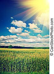 view on cornfield in summer instagram stile