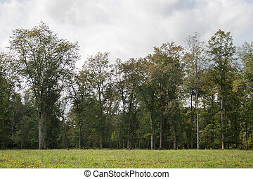 view on forest from meadow in Gauja National Park