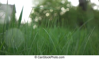 view on green lawn on a rainy evening, slow motion