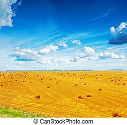 view on harvested field of wheat with many bales straw and beautiful blue sky