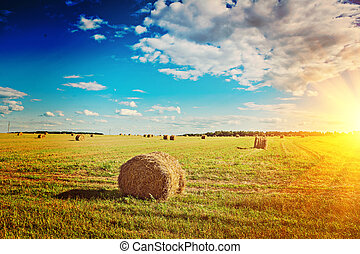 view on harvested field with bales of straw instagram stile