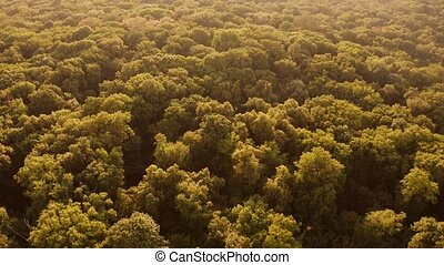 View on huge forest from above. Thick dense green trees ...