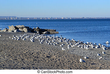 View on lake Ontario. - The view of lake Ontario, in ...