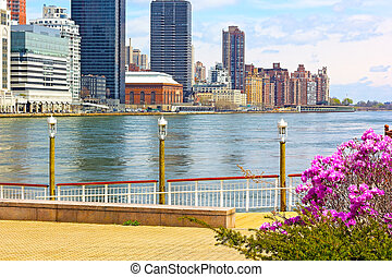 View on Manhattan from Roosevelt Island in spring. East River shore with booming trees.