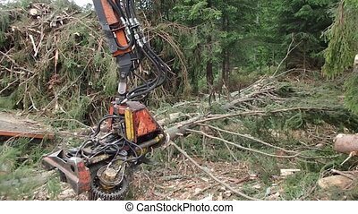 View on modern logger processing tree, Timber harvesting, -...