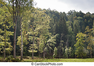 view on mountain with forest from meadow in Gauja National...