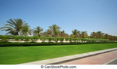 view on palms and shrubs from moving car in Oman - view on...