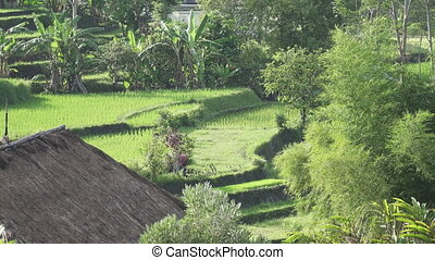 view on rice terraces of mountain and house of farmers....