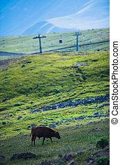 View on ski resort Gudauri in summer. The Republic Of...