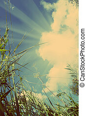 view on sky out of grass - vintage retro style