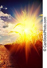 view on sunrise in corn field instagram stile