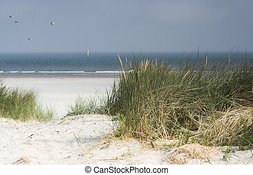Dutch dunes - View on the Dutch dunes near the isle of...