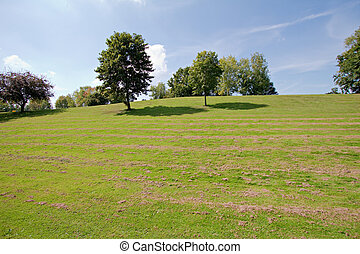 view on the green hill with trees