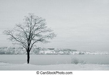 tree at riverside at winter