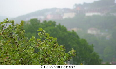 View on trees under the heavy rain and wind. Storm in...