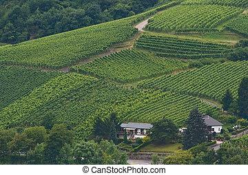 View on vineyards in summer