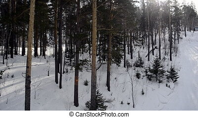 View on winter forest with ski lift
