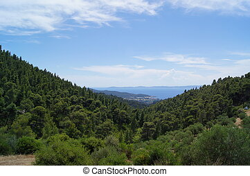 View Over A Forest Onto The Ocean