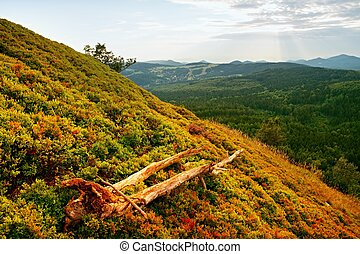 View over fallen old tree and bushes of blueberries to fall valley. Sunset at horizon