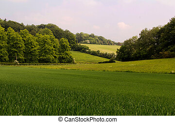 View over the Chilterns landscape in Buckinghamshire,...