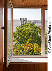 View through an open window of walnut trees in autumn