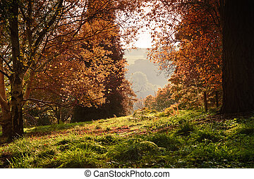 View through Autumn Fall forest with vibrant colors and lush...