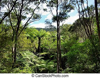 View through the treetops of native bushland in the Okura Bush Scenic Reserve near Auckland with
