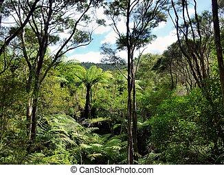 View through the treetops of native bushland in the Okura...