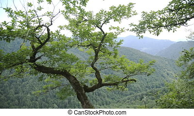 View through tree branches in forest to mountains with green...