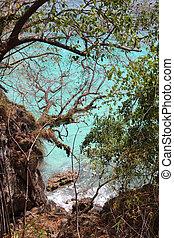 View through trees to sea