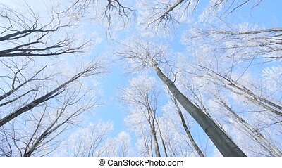 View to frozen top trees on blue sky background