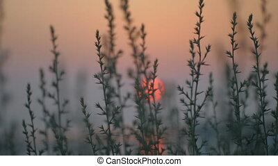 View to red evening sun through the grass