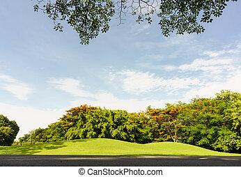 view under big tree in Public Park, Vachirabenjatas Park (Rot Fai Park)