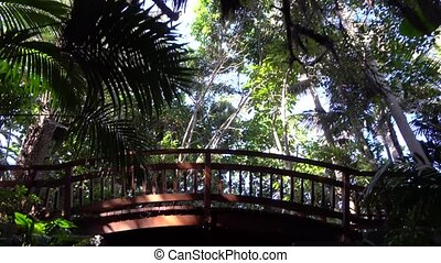view under the trees at Jungle park - walking under the Plam...
