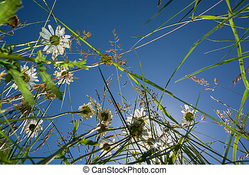 View up in a flower meadow