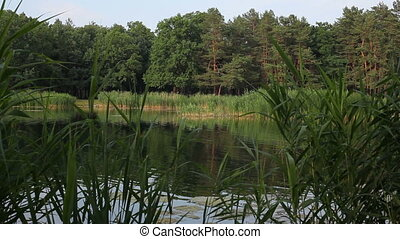 Views from the side of a lake at the park. - Views from the...