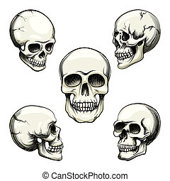 views of human skull - Set of five different greyscale views...