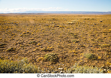 Sunny day in Pampas, landscape and nature of Patagonia, Argentina, South America