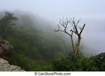 Views Pa Hin Ngam National Park in Chaiyaphum thailand