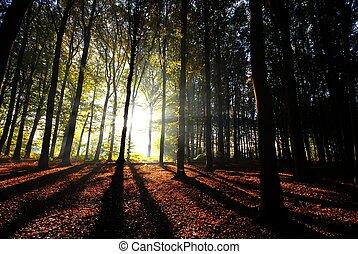 vigas, através, árvores, despeje, luz