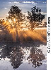 vigas, de, sol de la mañana, filtración, por, el, árbol