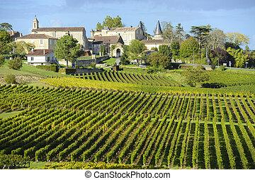 vigne, di, santo, emilion, bordeaux, vigne