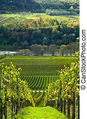 vigne, foresta