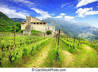 vigne, toscana