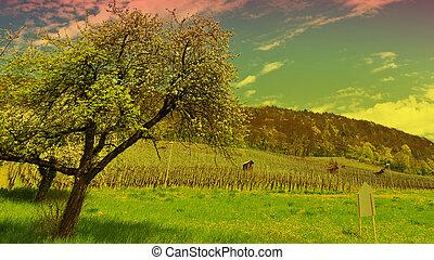vignoble, arbre fleurissant