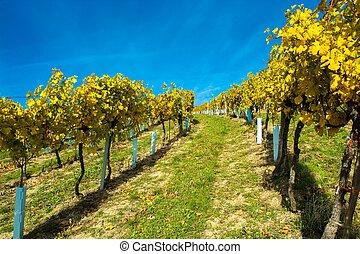 vignoble, automne, colline