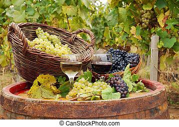 vignoble, blanc rouge, vin