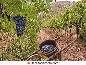 vignoble, collines, italien