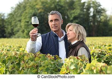 vignoble, couple, dégustation, vin